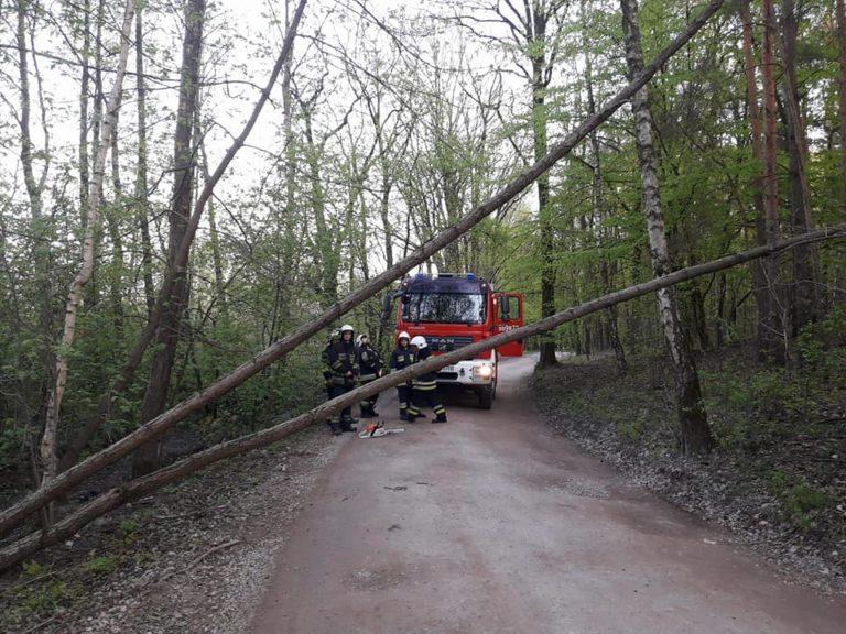 29. 19.04.2018 – Pochylone drzewo – Klaudyn ul. Szymanowskiego