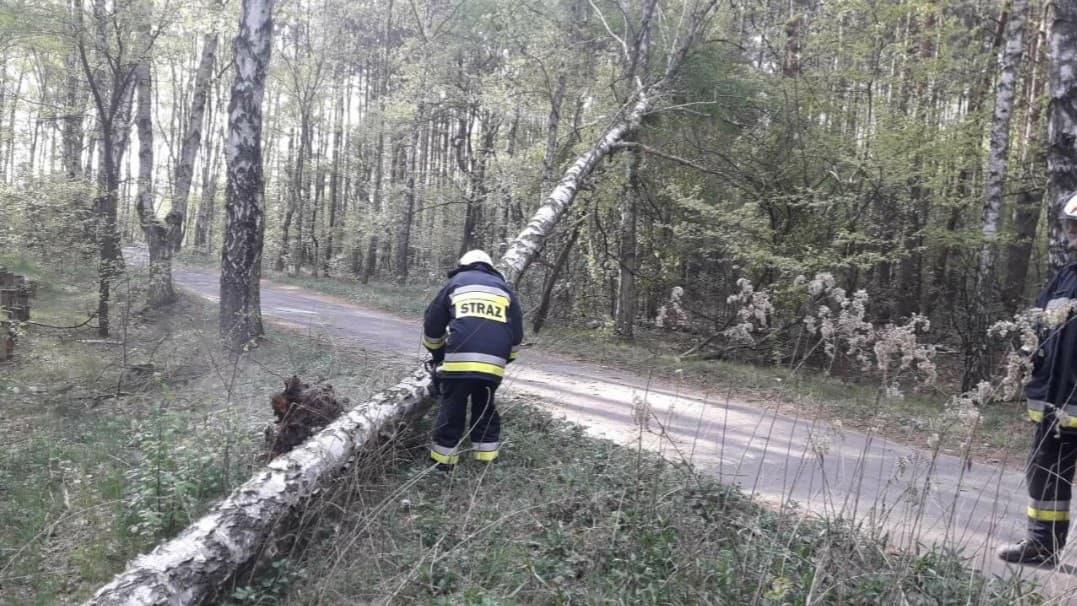 25 kwietnia 2019 r. – Przewrócone drzewo – Janów , Gmina Stare Babice