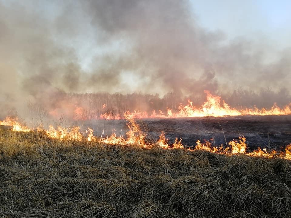 Pożar traw w miejscowości Klaudyn