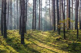 Znów możemy korzystać z lasów, parków i przestrzeni publicznej :)